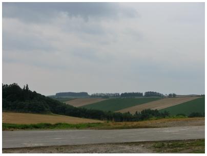 パッチワークの丘