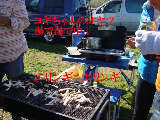 20091109-7a.jpg