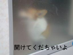 20091224-2_256.jpg