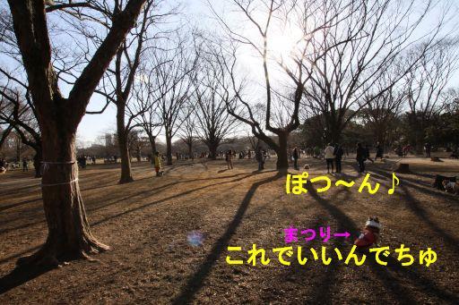 20100109-12.jpg