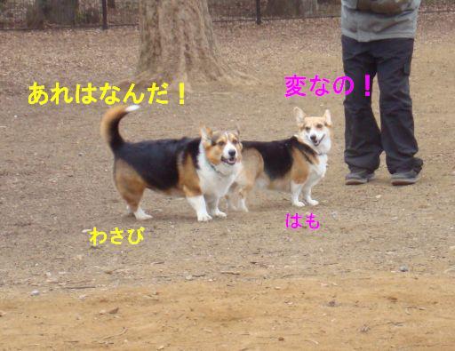 20100111-5.jpg