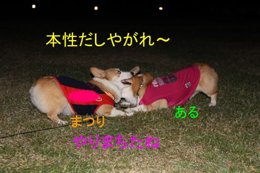 IMG_4374_1_1_512.jpg