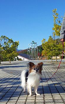 三段池公園でお散歩