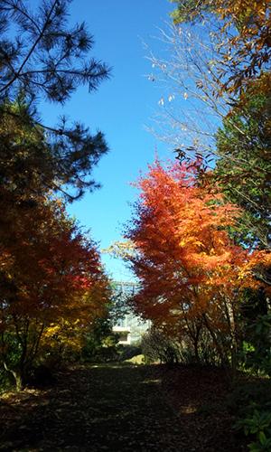 落ち葉いっぱい散歩道
