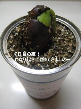 20100621 009a