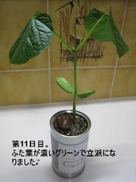 20100625 004a
