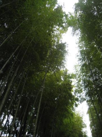blog 20100922-0923 修善寺あさば 133