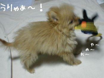 この犬、凶暴につき。