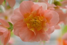 ブログ 2009 5・4の花