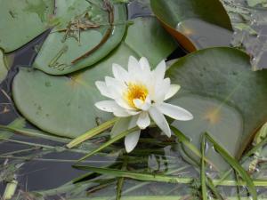 2ブログ 蓮の花
