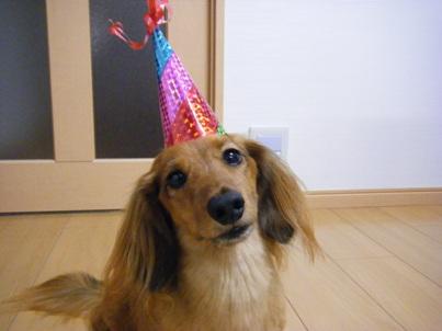犬の寿命を考えると誕生日を迎えるたびに、嬉しいような寂しいような・・・。