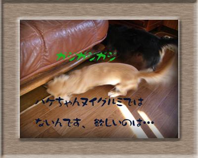 写真25(骨ガム)3