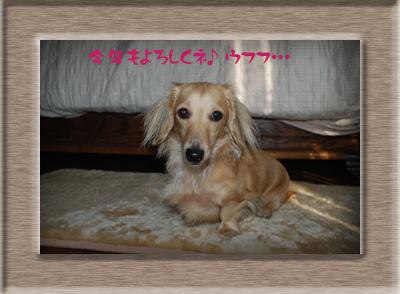 写真27(ピョンコ)2