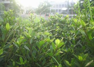 06 街角の花壇 (30%)