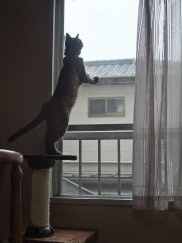 ミニタワーに立つ