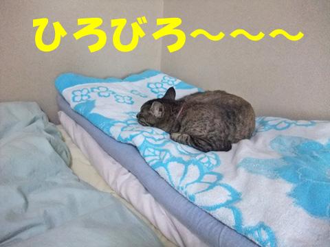 夏のベッド②