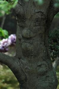 おつげの樹