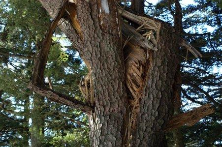 展望台の脇にあった折れた木