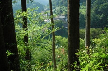登山道俯瞰1