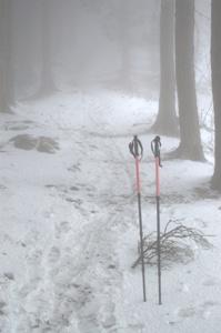 権現山への登山道