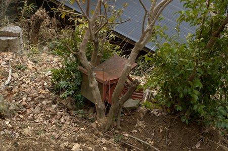 用竹の民家裏