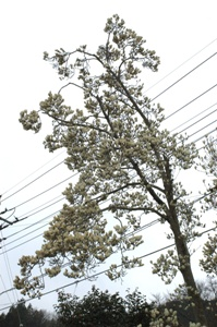 用竹のバス停