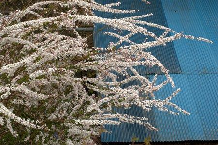 用竹に咲いていた花