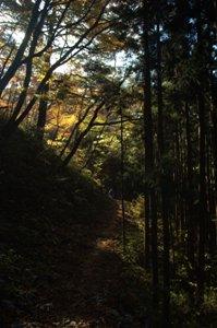 大楢峠への登山道