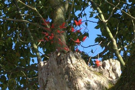 切り株から別の樹木