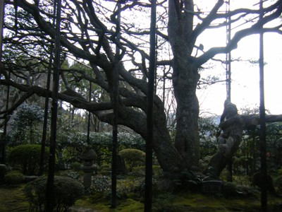 kyoutoharu 004