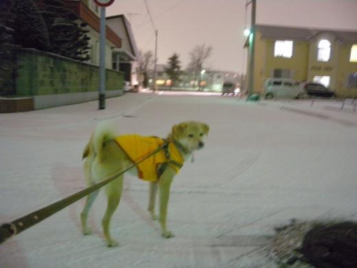 雪の夜散歩DSCN1325