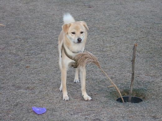 枯れススキと犬DSCN1314