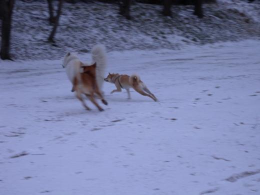 雪中走り込みDSCN1348