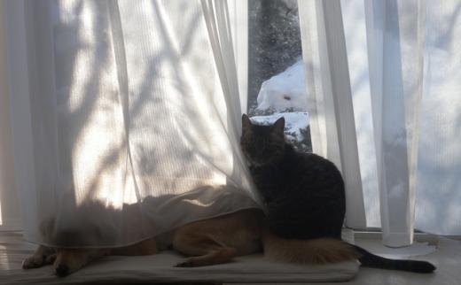 窓辺のしちおーDSCN1714