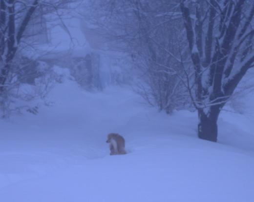 吹雪のしちゃんDSCN1809