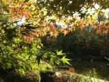府中の森公園の紅葉