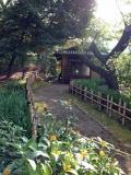 トーハク庭園