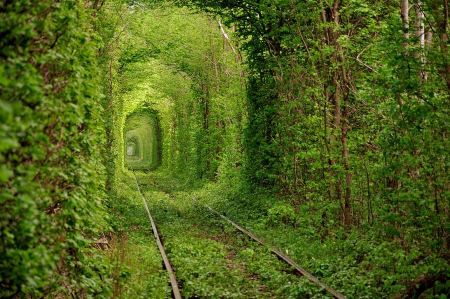 greenT1.jpg