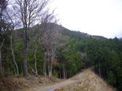 鳶ノ巣山を見上げる