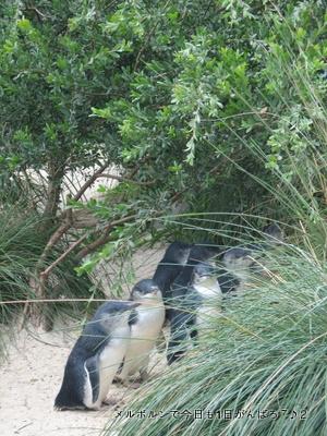 zoo2011-10.jpg