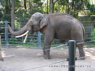 zoo2011-2.jpg