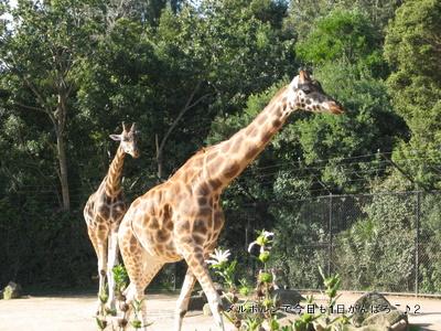 zoo2011-20.jpg