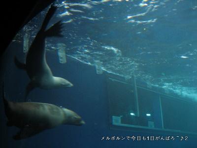 zoo2011-6.jpg