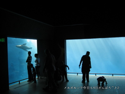zoo2011-7.jpg