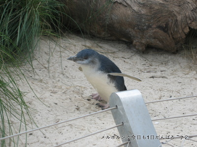 zoo2011-9.jpg