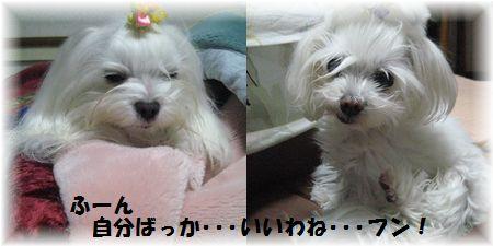 2012.01.29③