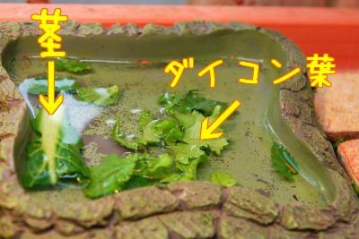 残飯の浮く水入れ