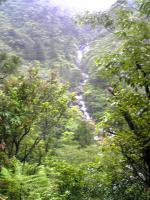 屋久島小杉谷2