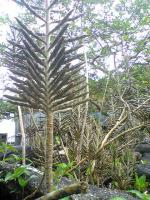 屋久島の亜熱帯植物1