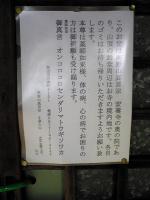 飯野山頂上2